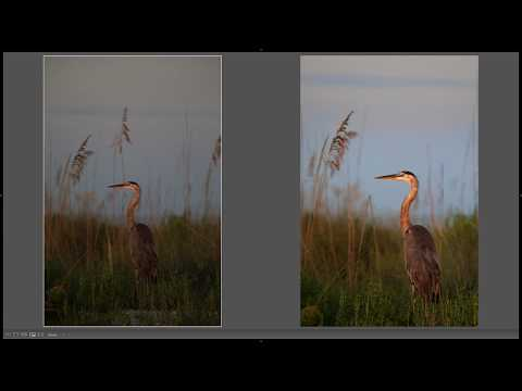Maximizing Post Production for Wildlife Photography