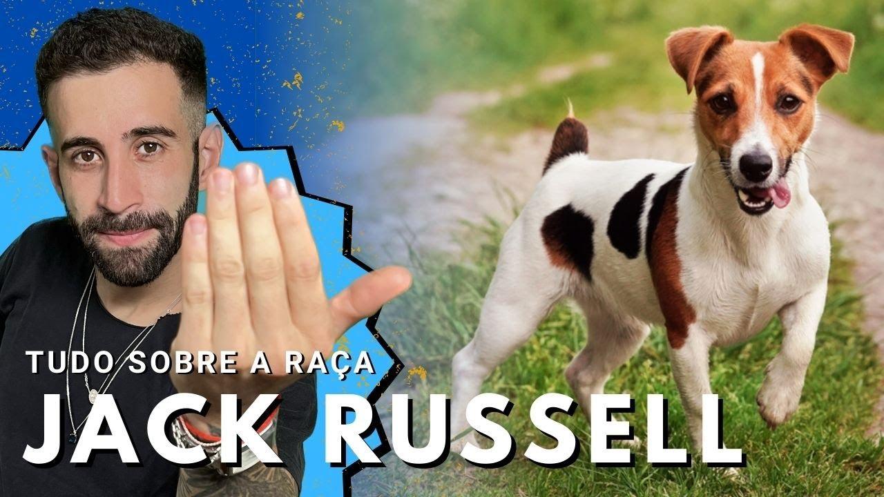 Jack russell terrier por dentro da ra a youtube - Jack russel queue coupee ...