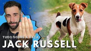 JACK RUSSELL TERRIER - POR DENTRO DA RAÇA