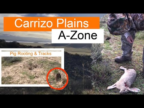 Scouting New Area For Wild Pig/Jack Rabbits: Carrizo Plains