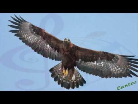 Canto del Águila Real