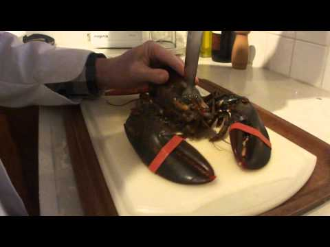 The lobster that wouldn't listen – how to kill a lobster
