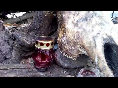 Следы сатанинских обрядов найдены в лесу у «Олимпика». Воронеж