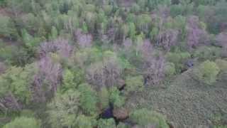空撮 アカエゾマツ 湿地林