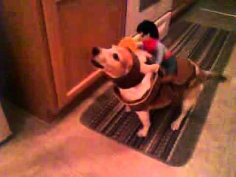 Beasley the Bucking Beagle - Part II
