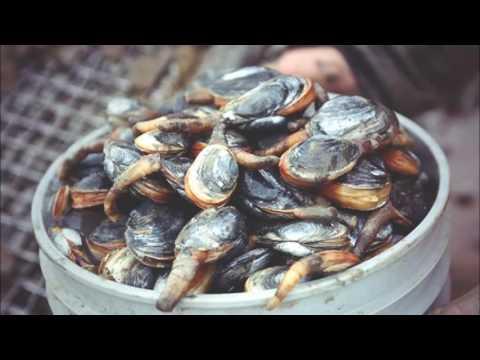Le Voyage Gastronomique de Nantes