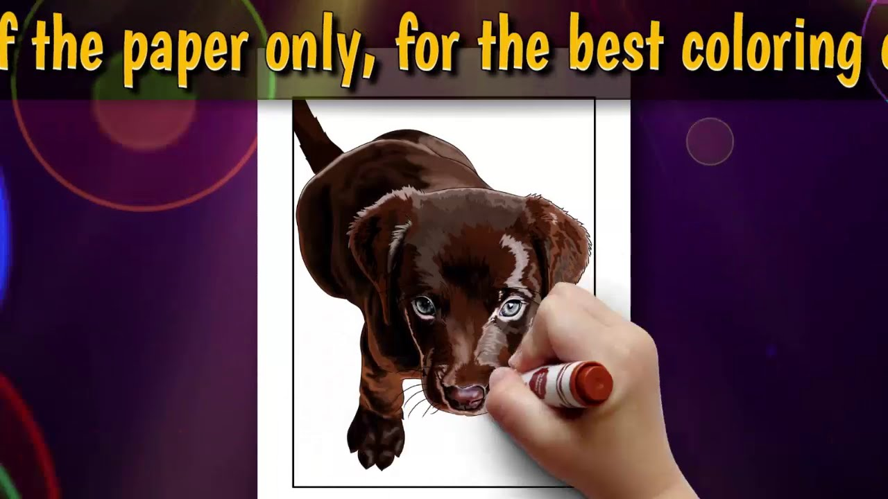 Labrador Coloring Book For Kids And Adults V4