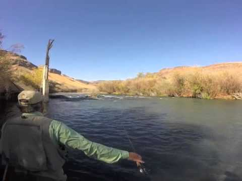 Fly fishing on the owyhee river youtube for Owyhee river fly fishing
