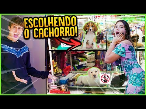 ESCOLHENDO O NOSSO NOVO CACHORRINHO!! [ REZENDE EVIL ]