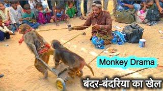 बंदर बंदरिया के गजब के कारनामे: मदारी का खेल|Comedy Drama show of Indian Funny Monkey