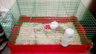 Содержание кроликов!Содержание кроликов дома.🐰Декоративный кролик