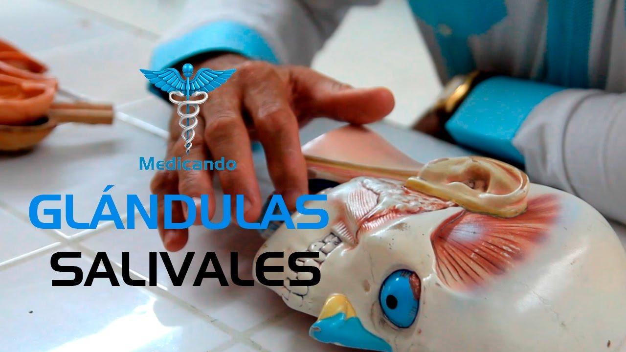 Anatomía de las Glandulas Salivales - YouTube