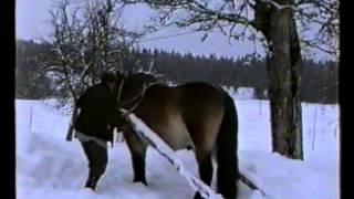 Bonden Sven Jansson plogar snö med Prinsen 1994-02-05