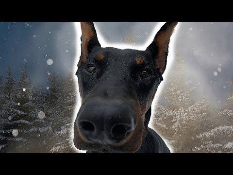 DOBERMAN FIRST TIME IN SNOW | Dog Vlog