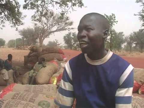 Comment conserver les oignons en afrique youtube - Comment conserver les oignons ...