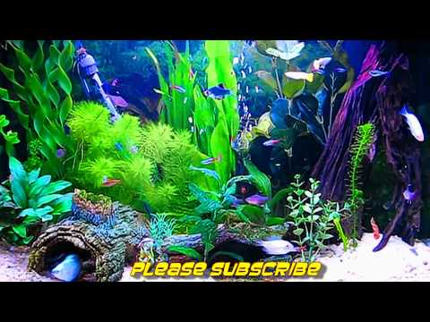 Amazing HD Aquarium ScreenSaver (Free) Windows And Android