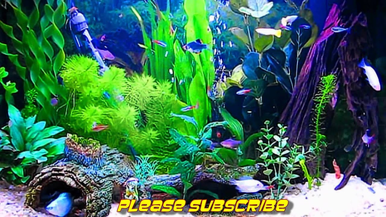 amazing hd aquarium screensaver (free) windows and android - youtube