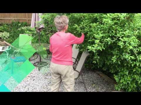 3 Powerful Tips For Senior Gardeners