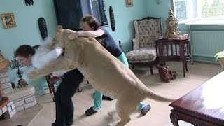 Repeat youtube video Lion attacks man at home