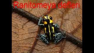Poison Dart Frogs List