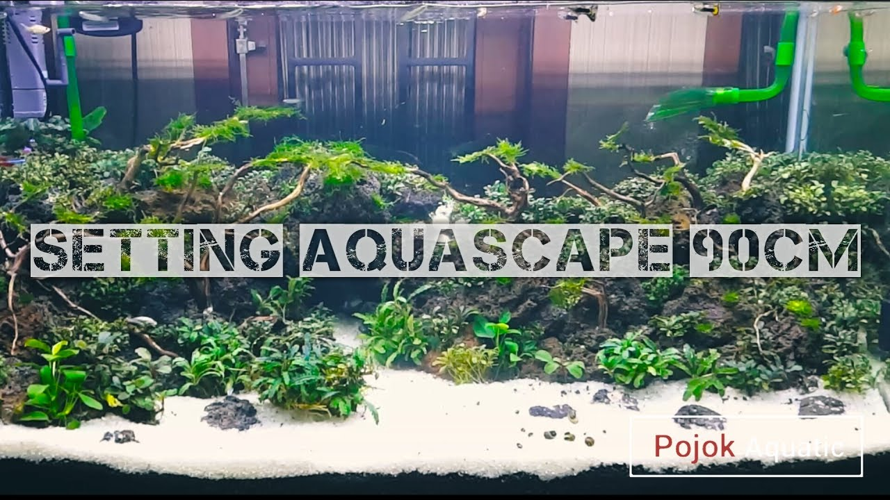 SETTING AQUASCAPE 90CM (Pojok Aquatic) - YouTube