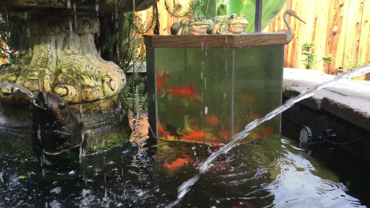 Fish pond oberservation tower inverted above pond for Fish tank vs pond