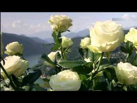 semino rossi wenn die weissen rosen bl hen 2009 youtube. Black Bedroom Furniture Sets. Home Design Ideas