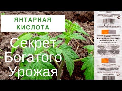 Янтарная Кислота для Богатого Урожая. Супер подкормка растений.