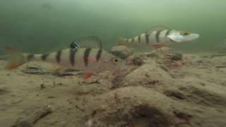 видео Рыболовная база на можайском водохранилище в горетово