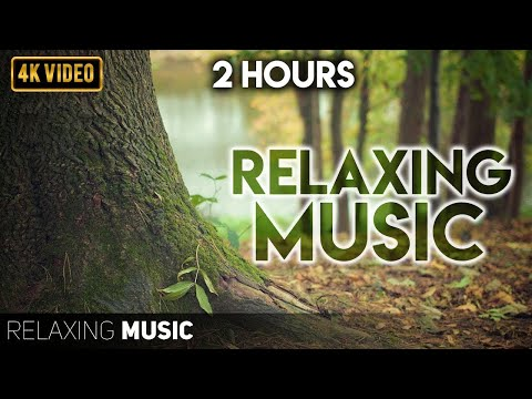 Best Relax House, Chillout, Study, Running, Gym, Happy Music Mix 2021 || TEAM BUNNY