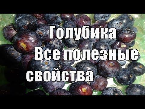 Голубика полезные свойства уникальной ягоды