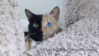 Кошка с необычным окрасом
