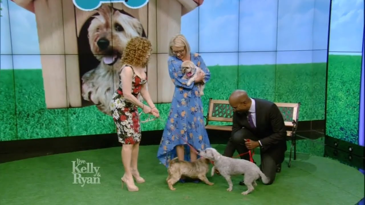 Dog Makeovers with Bernadette Peters