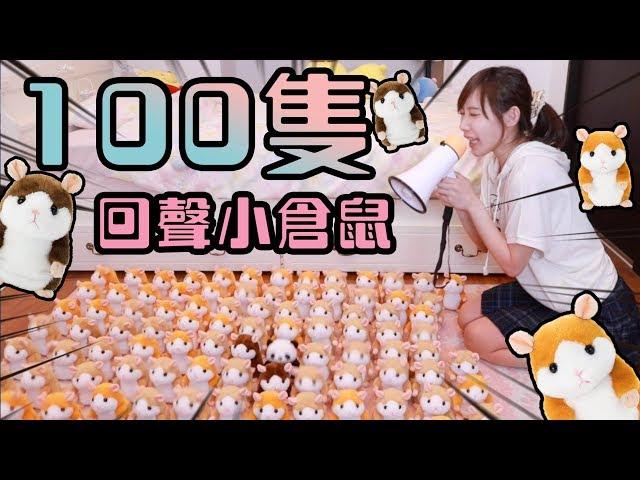 倉鼠二週年企劃!能成功讓100隻倉鼠入教嗎?!| 安啾 (ゝ∀・) ♡