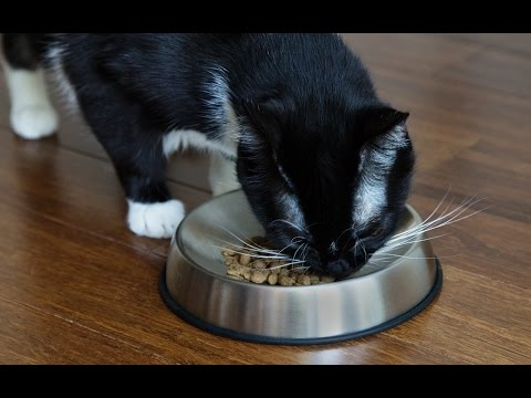 Why do cats throw food on the floor?