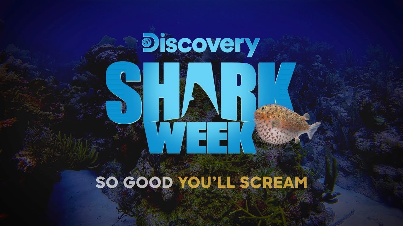 Shark Week 2019: Air Date, Time, Schedule, Channel, How to Watch