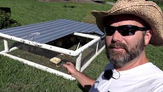 THE DIRTY SECRETS YOU SHOULD KNOW ABOUT RAISING PASTURED POULTRY....
