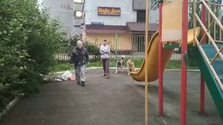 Дворовые Собаки на детской площадке часть 1