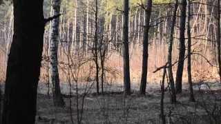 Поход в лес  Два дня в весеннем лесу  День 1(Поход проходил в лесах вблизи города Гадяч Полтавской области. В этот день хотелось заснять как можно больш..., 2015-08-02T11:01:03.000Z)