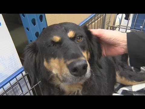 Man buying new K9 for New Berling PD