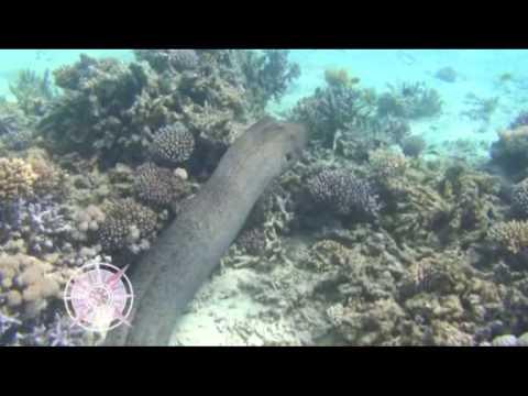 Опасные хищники Красного моря