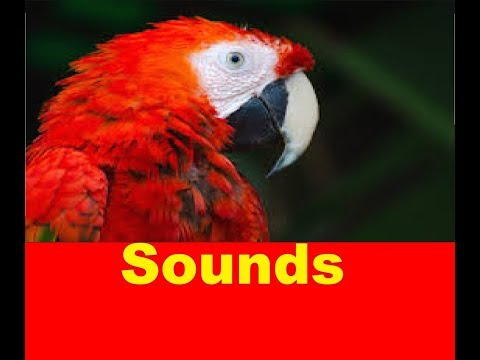 Parrot Sound Effects All Sounds