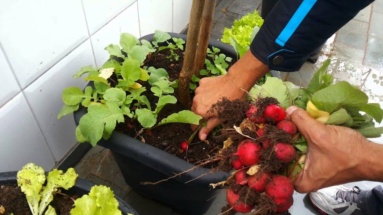 Rabanetes em vasos youtube for Como plantar patatas en casa
