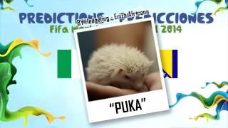 """PUKA"" (Erizon Cavani) la Eriza predice el partido NIGERIA vs BOSNIA 2014 MUNDIAL DE FUTBOL"