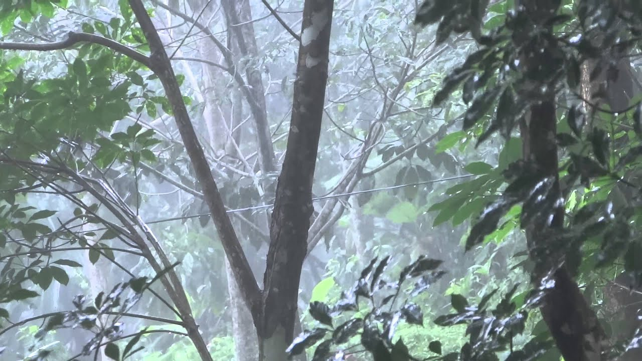 Rain At Kerala