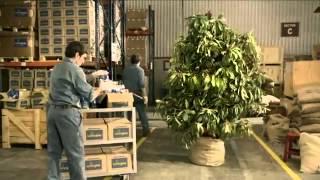 La Virginia: Planta