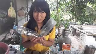 ขวดน้ำพลาสติกเหลือๆ อย่าทิ้ง เอามาปลูกพริกท่าใหม่แบบนี้ กันดีกว่าจร้า