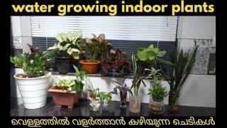 How to grow indoor plants in water, Easiest indoor plants grow in water in malayalam.