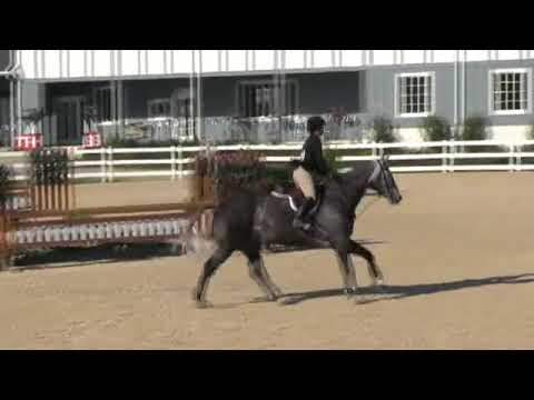 Video of CHAGALL ridden by BRITTA STOECKEL from ShowNet!
