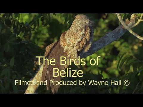 The Birds of Belize, Version 13,  Full DVD